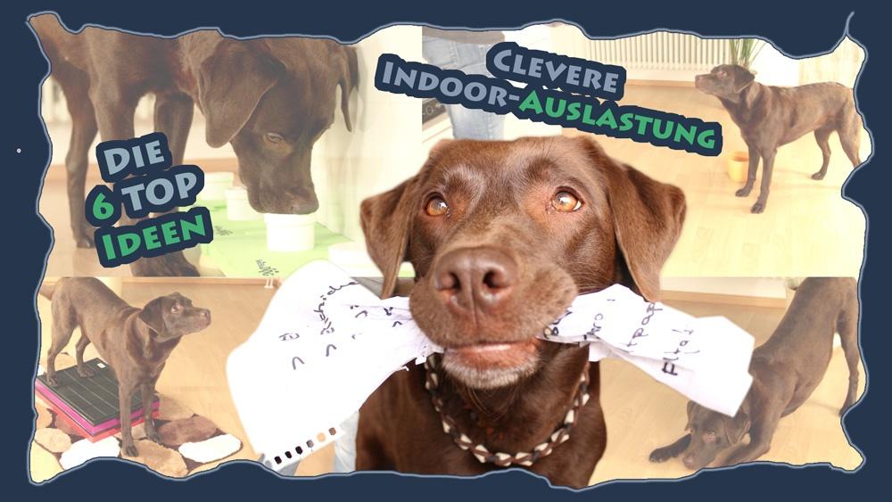 Hundetraining – Die 6 Top Ideen zur cleveren Indoor-Auslastung: Kopfarbeit für Hunde im Haus