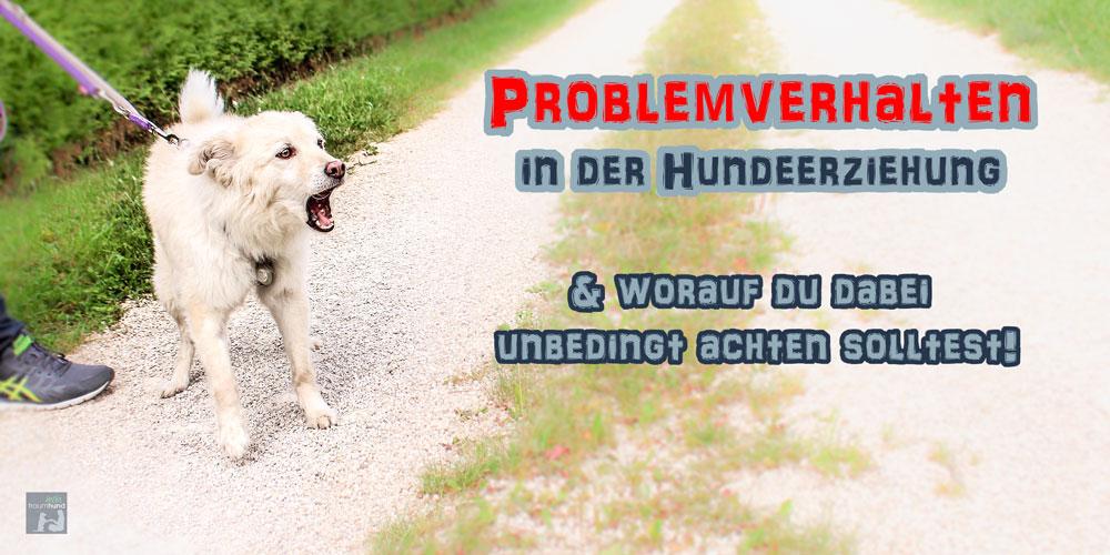 PROBLEMVERHALTEN in der Hundeerziehung & worauf du dabei unbedingt achten solltest!