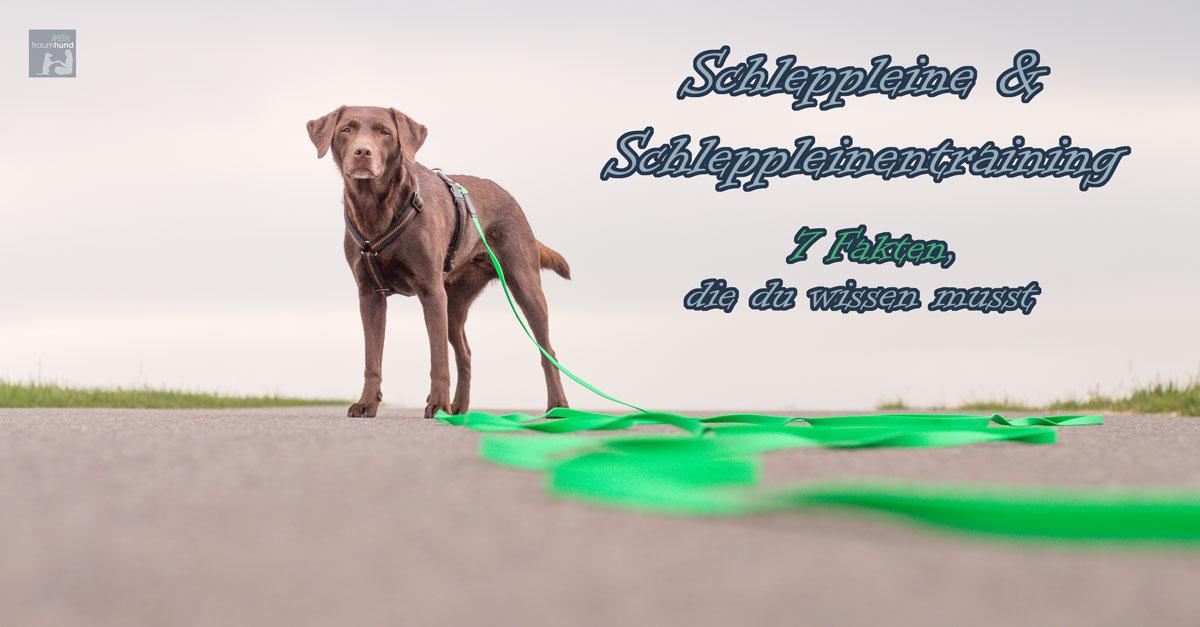 Schleppleine & Schleppleinentraining