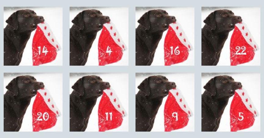 Was dir dein Hund sagen will… Dein Körpersprache-Adventskalender