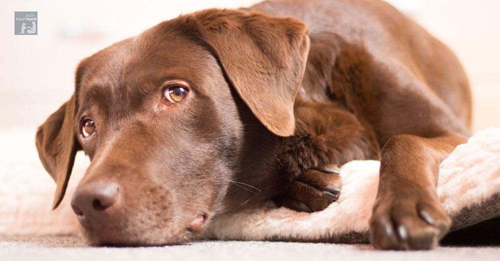 Hundeerziehung – Dieser Fehler sollte dir nicht passieren!