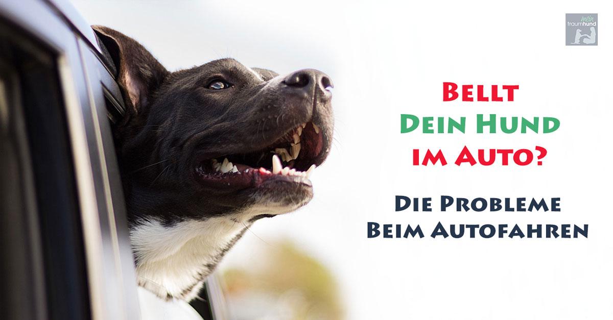 Bellt dein Hund im Auto? Die Probleme beim Autofahren…