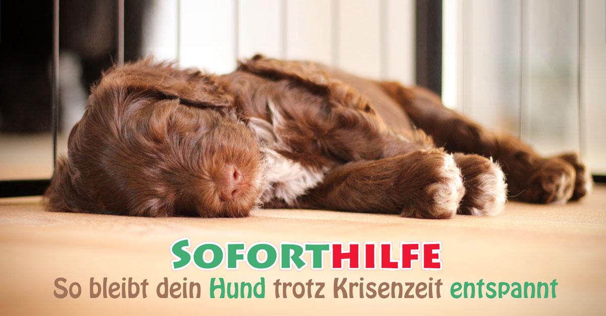 Soforthilfe – So bleibt dein Hund trotz Krisenzeit entspannt