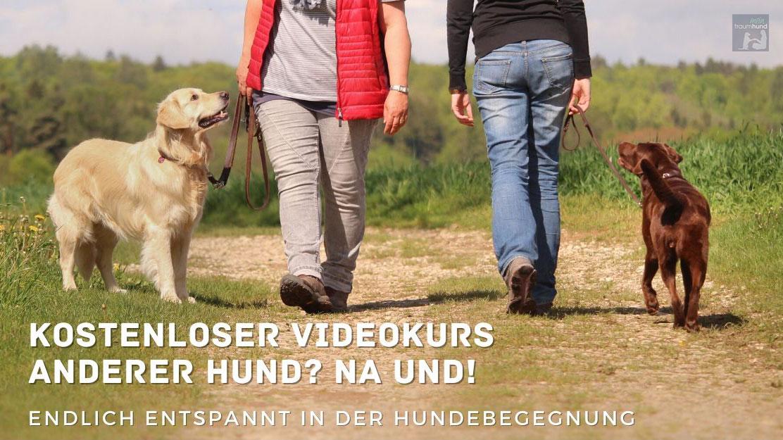 Entspannte Hundebegegnungen – kostenloser Videokurs