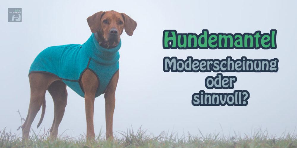 Hundemantel – Modeerscheinung oder sinnvoll?