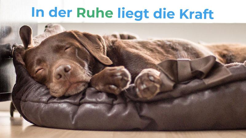 In der Ruhe liegt die Kraft - Hundetraining Ruhekurs