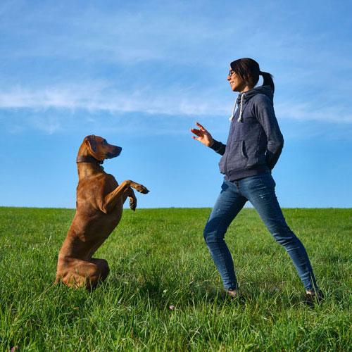 Hundetrainer Sarah Ridgeback Chuma Tricktraining