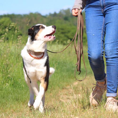Tierschutzhund Hundetraining lockere Leine meintraumhund