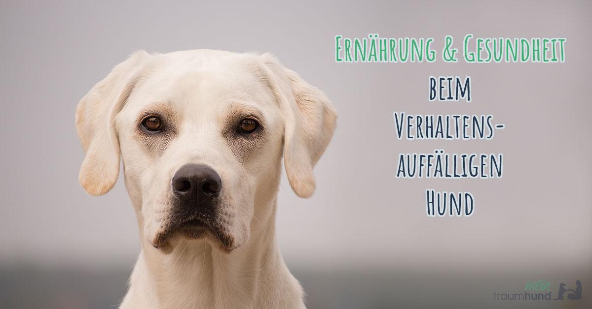 Ernährung und Gesundheit beim verhaltensauffälligen Hund