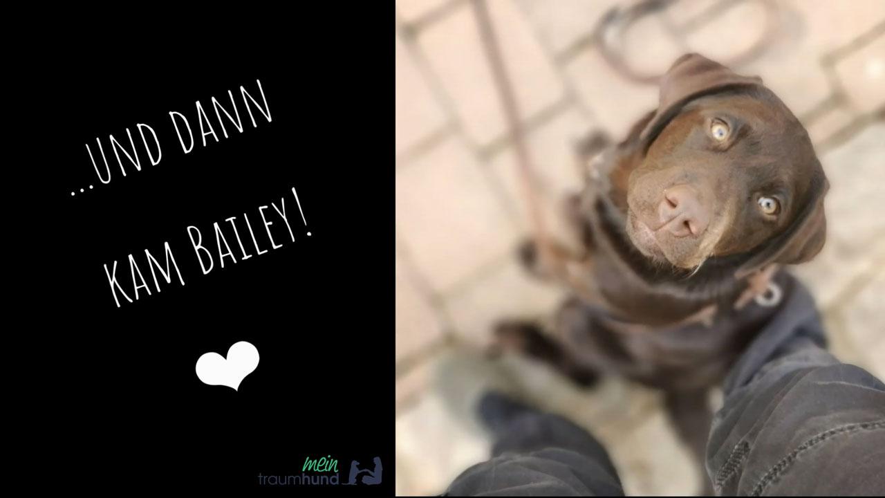 Welpenerziehung von Labrador Bailey